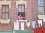 Çamaşır seren artist