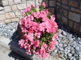 Çiçek güzelliği