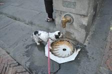 Siena suyu içilecek