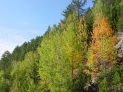 Batı Karadeniz ormanları