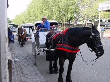 Sacramento' da at arabası