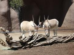 Hayvanat bahçesi, San Diego