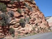 Çölde kırmızı kayalar