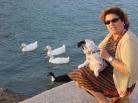 Ildırı ördekleri ve Gümüş