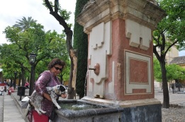 Katedral bahçesindeki çeşmeden su içmece