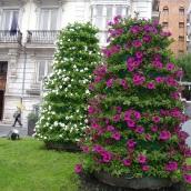 Santander'de çiçekler