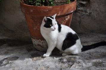 La Turbie kedisi