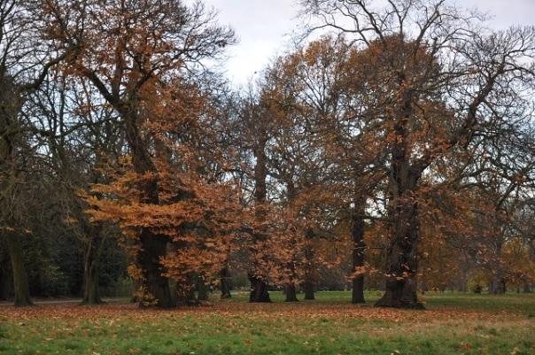 Hyde Park'ta sonbahar