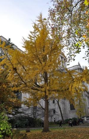 Katedral bahçesinde sonbahar