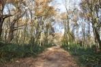 Wimbledon ormanı