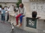Buda' da kuşçu