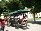 Schonbrunn'da gezi arabası