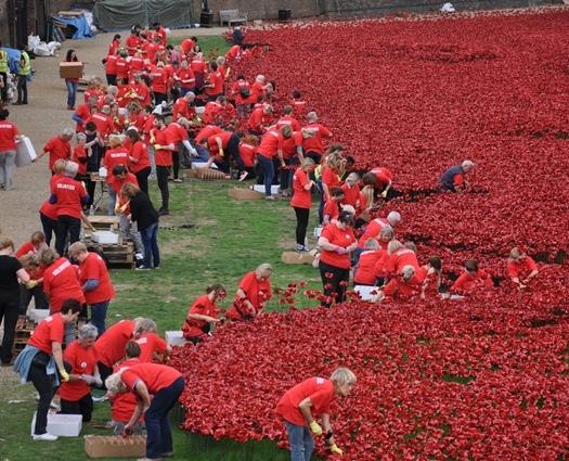 Poppy yerleştiren gönüllüler
