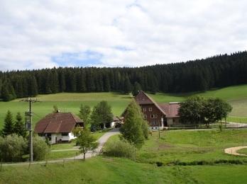 Freiburg bitki örtüsü
