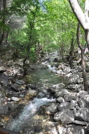 Bol su ve yeşil...