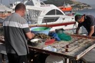 Balıkçı tarakları ayıklarken