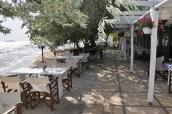 Pınar Oteli sahilinde iğde ağaçları
