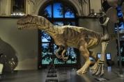 Naturhistoriches müzesi içi
